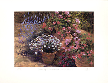 Pots of marguerites and roses